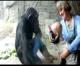 majmun-beba