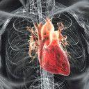Tahikardija srce