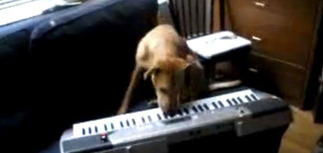 pas svira