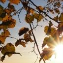 U BiH sutra se očekuje sunčano vrijeme, a krajem dana moguće naoblačenje