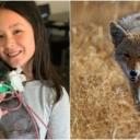 Hrabri jorkširski terijer suprotstavio se kojotu da bi zaštitio vlasnicu