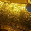 U KS oduzeta laboratorija za uzgoj i proizvodnju opojne droge marihuane