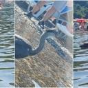 Nesvakidašnji prizor: Siva čaplja prepoznala ljepotu Panonskih jezera