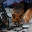Pas u Opatiji satima bio u pregrijanom automobilu, intervenisala policija