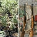 Kod Gruda pronađen zasad marihuane, oduzeto i oružje