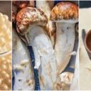 Deset najskupljih namirnica na svijetu