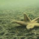 """Naučnici zabrinuti zbog razvoja """"mrtvih zona"""" u Tihom oceanu"""