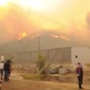 Požar zahvatio više stambenih područja na jugu Turske