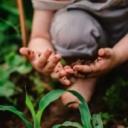 Finski vrtići postavili mini šume u dvorištima, pa pratili imunitet djece: Pozitivne promjene već nakon 28 dana