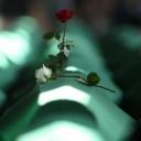 Identificirane još dvije žrtve genocida u Srebrenici