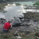 GSS spasio kobilu iz blatne lokve