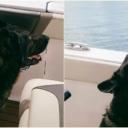 Oduševio prisutne: Njemački ovčar na brodu pjeva 'I will always vauuu you'