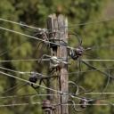 Nova kiša i novi vjetar ponovno ostavili mještane Par Sela, Pasaca i Morančana bez struje