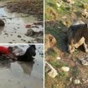 Iz blata kod Livna spasili ždrebicu: 'Bio je s njom u mulju dva sata dok je nije izvukao…'