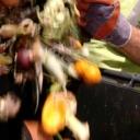 Domaćinstva u regionu godišnje bace više od 1,8 miliona tona hrane