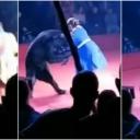 Neviđena scena u cirkusu: Medvjed napao trudnu ženu, publika ostala u šoku